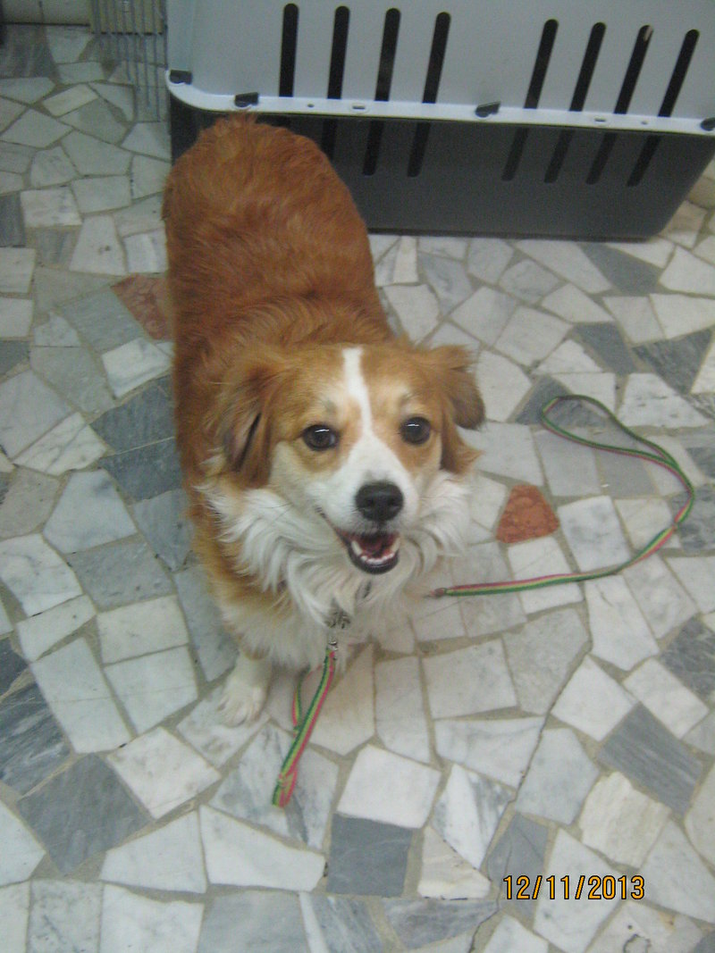 Sissy, liebe kleine Hundeprinzessin... 16471743ra