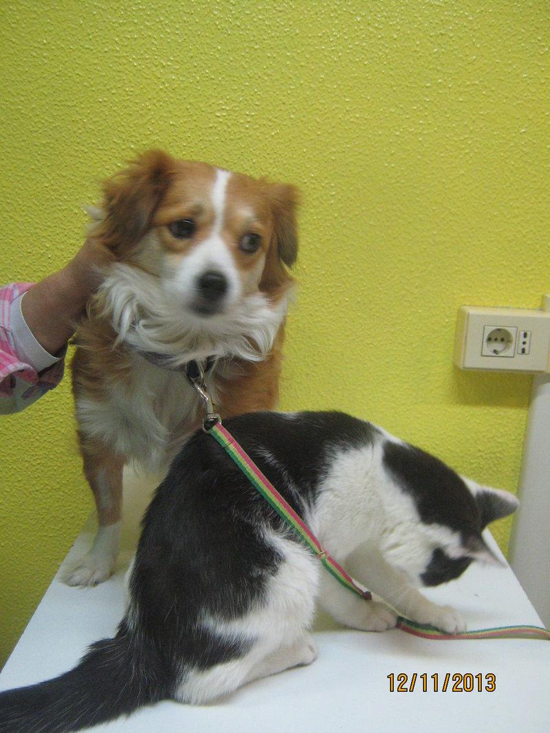 Sissy, liebe kleine Hundeprinzessin... 16471744pb