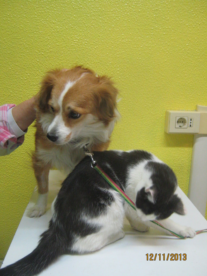 Sissy, liebe kleine Hundeprinzessin... 16471746it