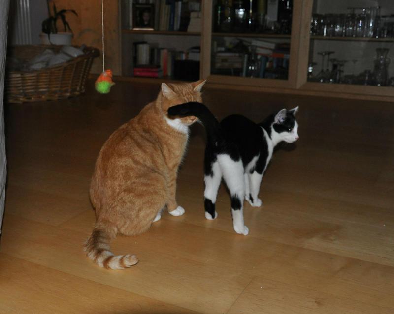 Katzenkinder suchen Zuhause 16543820vp