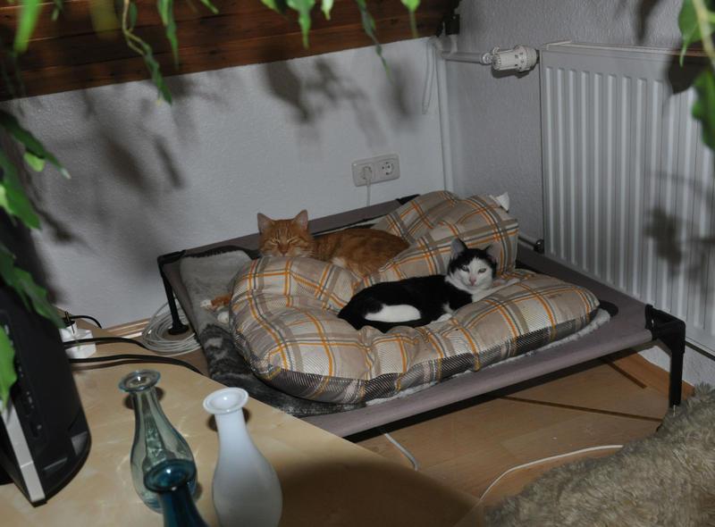 Katzenkinder suchen Zuhause 16543823zd