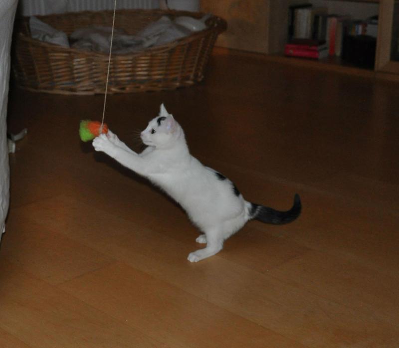 Katzenkinder suchen Zuhause 16543827ay