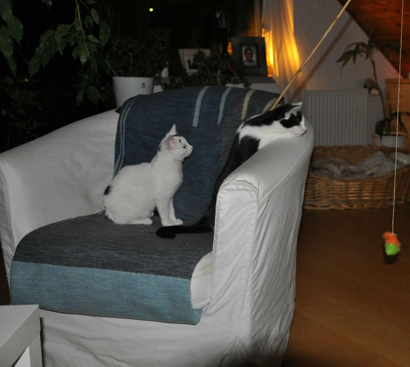 Katzenkinder suchen Zuhause 16543830pj