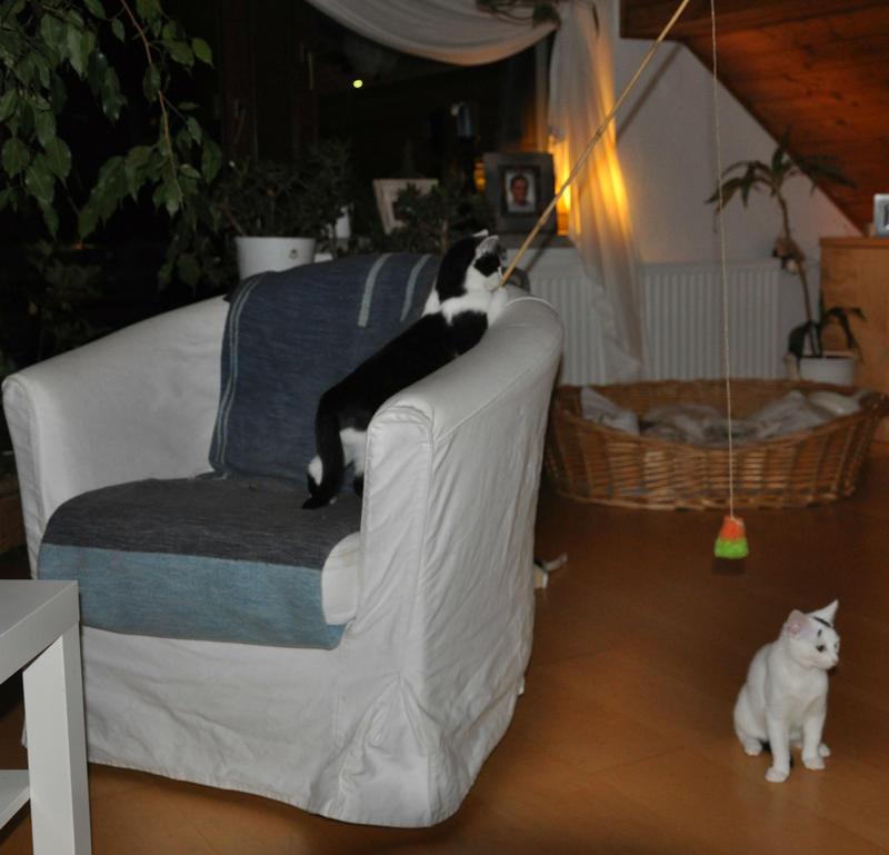 Katzenkinder suchen Zuhause 16543834im