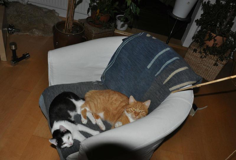 Katzenkinder suchen Zuhause 16543835bq
