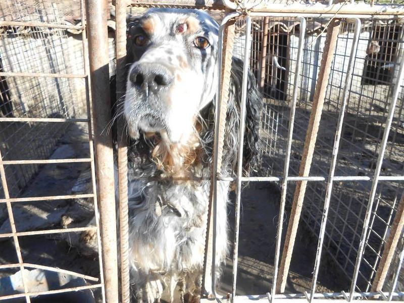 Dringender Spendenaufruf für 30 verwahrloste Hunde aus Sahagun/Spanien 16743453yd