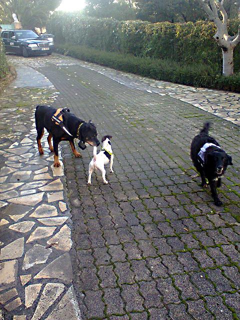 Bildertagebuch - Terri, kleiner Terriermann mit tollem Charakter... - in Frankreich ZUHAUSE GEFUNDEN! 17015202go