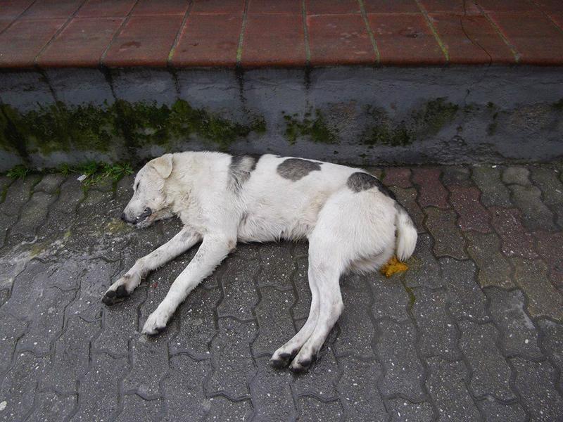 Vergiftungsaktion in Tirnavos/Griechenland 17338699wx