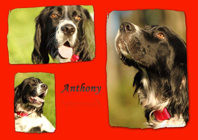 Bildertagebuch - Anthony, ein echter Traumsetter... - in Spanien ZUHAUSE GEFUNDEN! 17826835ev