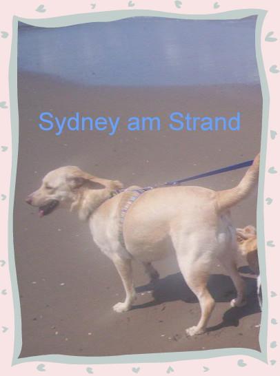 Sydney ist angekommen - Seite 2 18540360nw