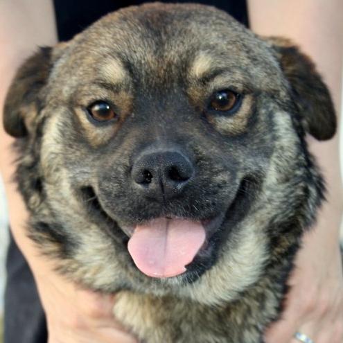 Bildertagebuch - Ferdi, der lustigste Hund der Auffangstation... - in Spanien ZUHAUSE GEFUNDEN! 18575201jz