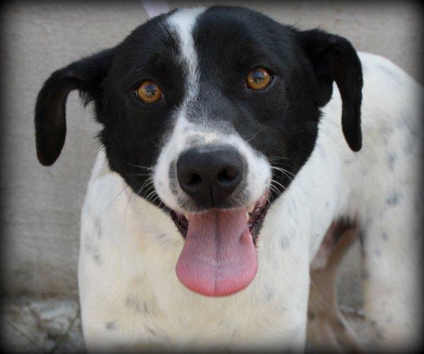 Bildertagebuch - Berto, junger Terriermix... - in Spanien ZUHAUSE GEFUNDEN! 18577941nq