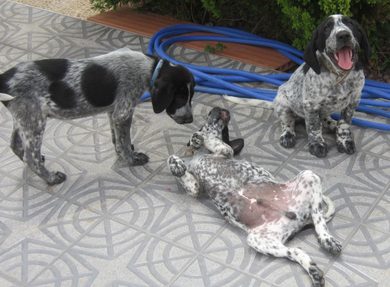 Wieviel ist ein kleines Hundeleben wert? – Namenspaten für 5 Hundejungs gefunden, weitere Spender gesucht... - Seite 2 18655203ib