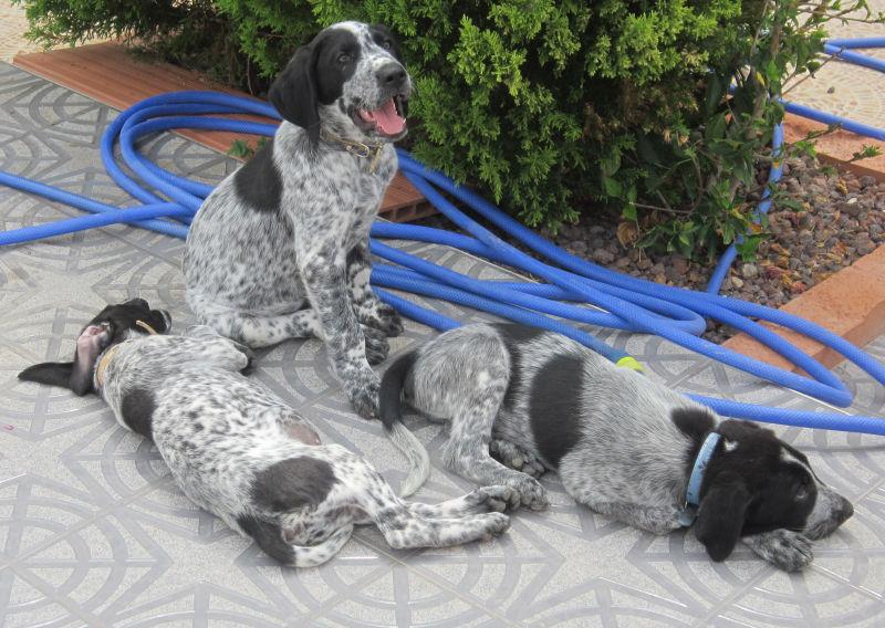 Wieviel ist ein kleines Hundeleben wert? – Namenspaten für 5 Hundejungs gefunden, weitere Spender gesucht... - Seite 2 18655204iu