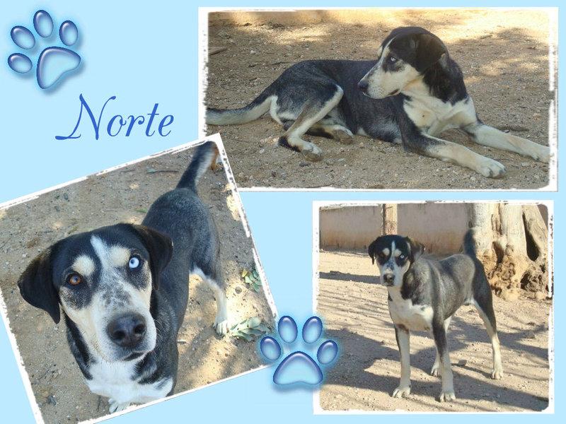 """Bildertagebuch - Norte, ein """"bunter Hund"""" mit Sommersprossen... - in Spanien ZUHAUSE GEFUNDEN! 19068104sz"""