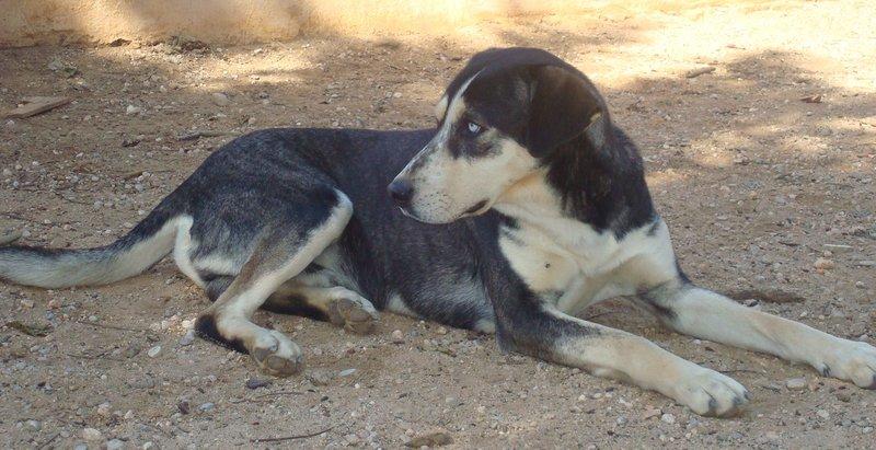 """Bildertagebuch - Norte, ein """"bunter Hund"""" mit Sommersprossen... - in Spanien ZUHAUSE GEFUNDEN! 19068119lp"""