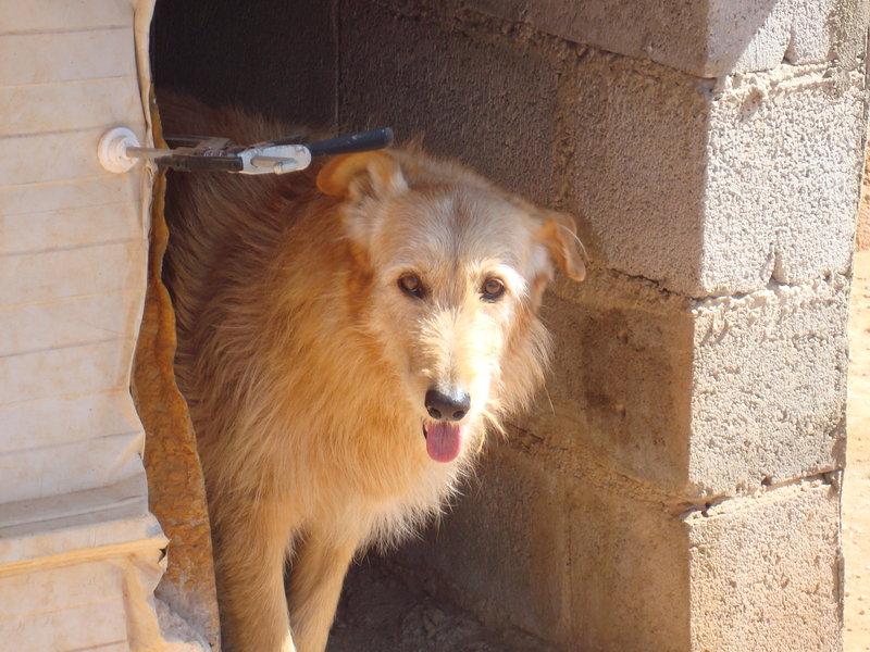 Bildertagebuch - Cher, schüchternes altes Mädchen wartet seit 12 Jahren in der Auffangstation... 19154467qw