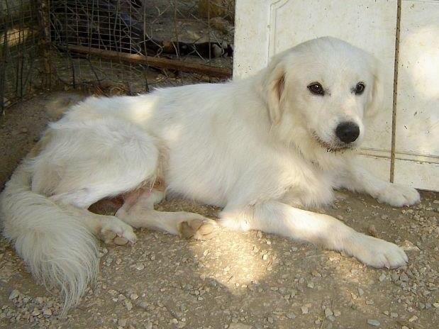 Sammy, trauriger Traumhund sehnt sich nach seiner Familie... - wird über andere Orga vermittelt 19173123gm