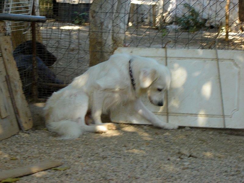 Sammy, trauriger Traumhund sehnt sich nach seiner Familie... - wird über andere Orga vermittelt 19173133ve