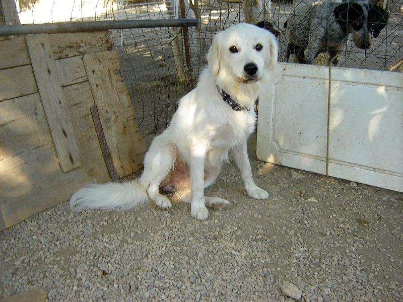 Sammy, trauriger Traumhund sehnt sich nach seiner Familie... - wird über andere Orga vermittelt 19173135lw