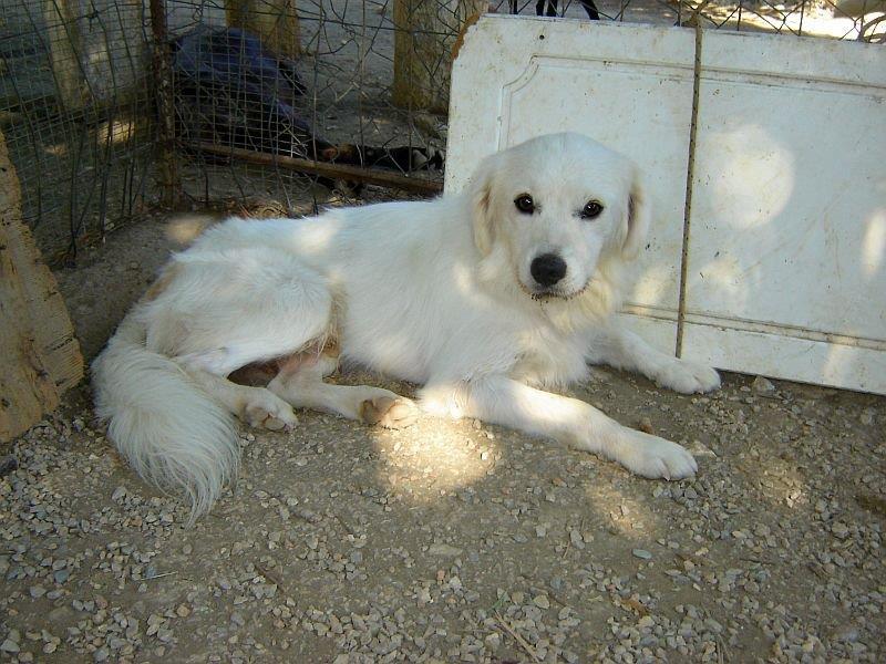 Sammy, trauriger Traumhund sehnt sich nach seiner Familie... - wird über andere Orga vermittelt 19173136vc