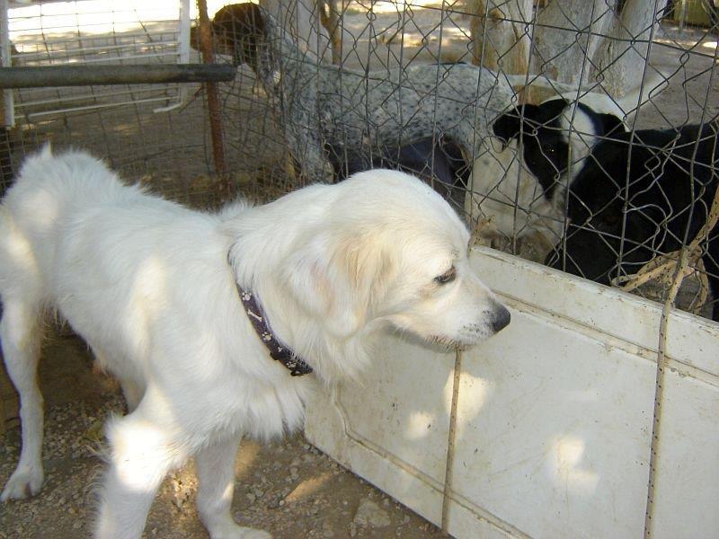 Sammy, trauriger Traumhund sehnt sich nach seiner Familie... - wird über andere Orga vermittelt 19173137zn