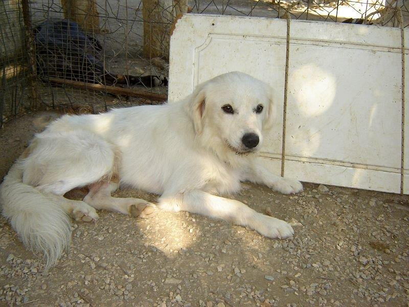 Sammy, trauriger Traumhund sehnt sich nach seiner Familie... - wird über andere Orga vermittelt 19173139fw