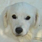 Sammy, trauriger Traumhund sehnt sich nach seiner Familie... - wird über andere Orga vermittelt 19173142tz