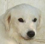 Sammy, trauriger Traumhund sehnt sich nach seiner Familie... - wird über andere Orga vermittelt 19173143yv