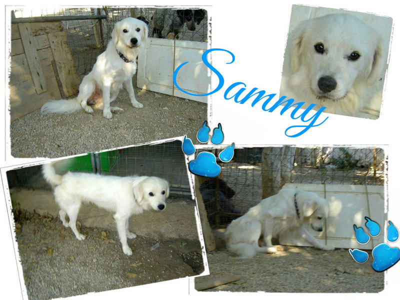 Sammy, trauriger Traumhund sehnt sich nach seiner Familie... - wird über andere Orga vermittelt 19173147bu