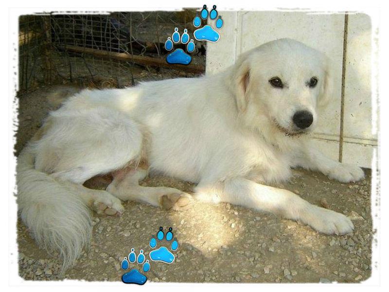 Sammy, trauriger Traumhund sehnt sich nach seiner Familie... - wird über andere Orga vermittelt 19173149ir