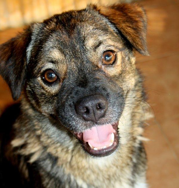 Bildertagebuch - Ferdi, der lustigste Hund der Auffangstation... - in Spanien ZUHAUSE GEFUNDEN! 19205092wp