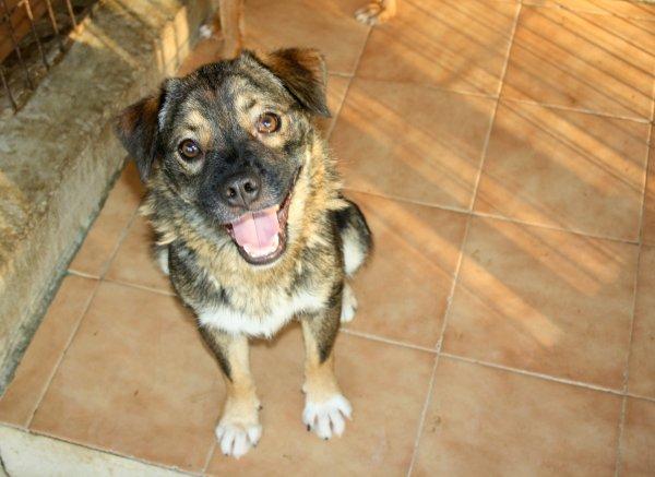 Bildertagebuch - Ferdi, der lustigste Hund der Auffangstation... - in Spanien ZUHAUSE GEFUNDEN! 19205098fk