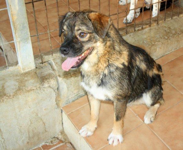 Bildertagebuch - Ferdi, der lustigste Hund der Auffangstation... - in Spanien ZUHAUSE GEFUNDEN! 19205099jh