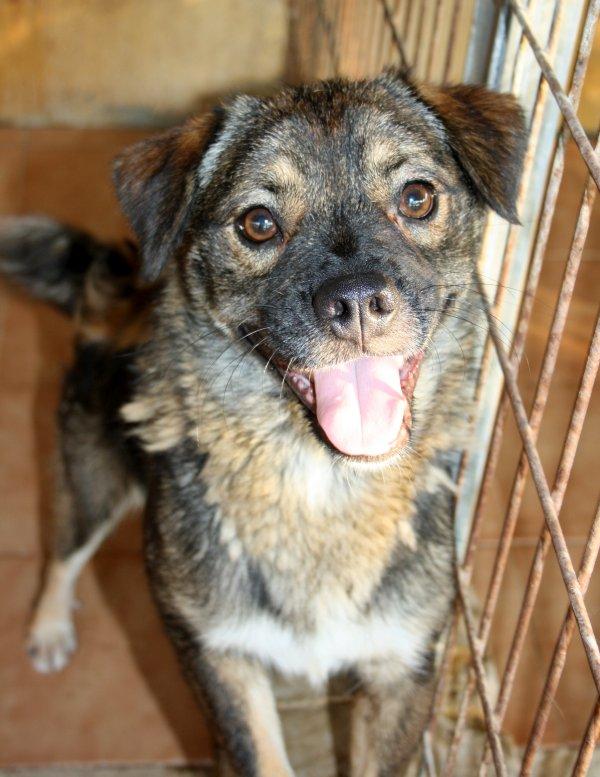 Bildertagebuch - Ferdi, der lustigste Hund der Auffangstation... - in Spanien ZUHAUSE GEFUNDEN! 19205100hp