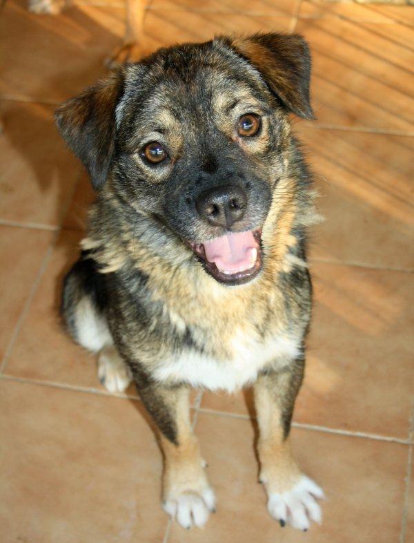 Bildertagebuch - Ferdi, der lustigste Hund der Auffangstation... - in Spanien ZUHAUSE GEFUNDEN! 19205101tj