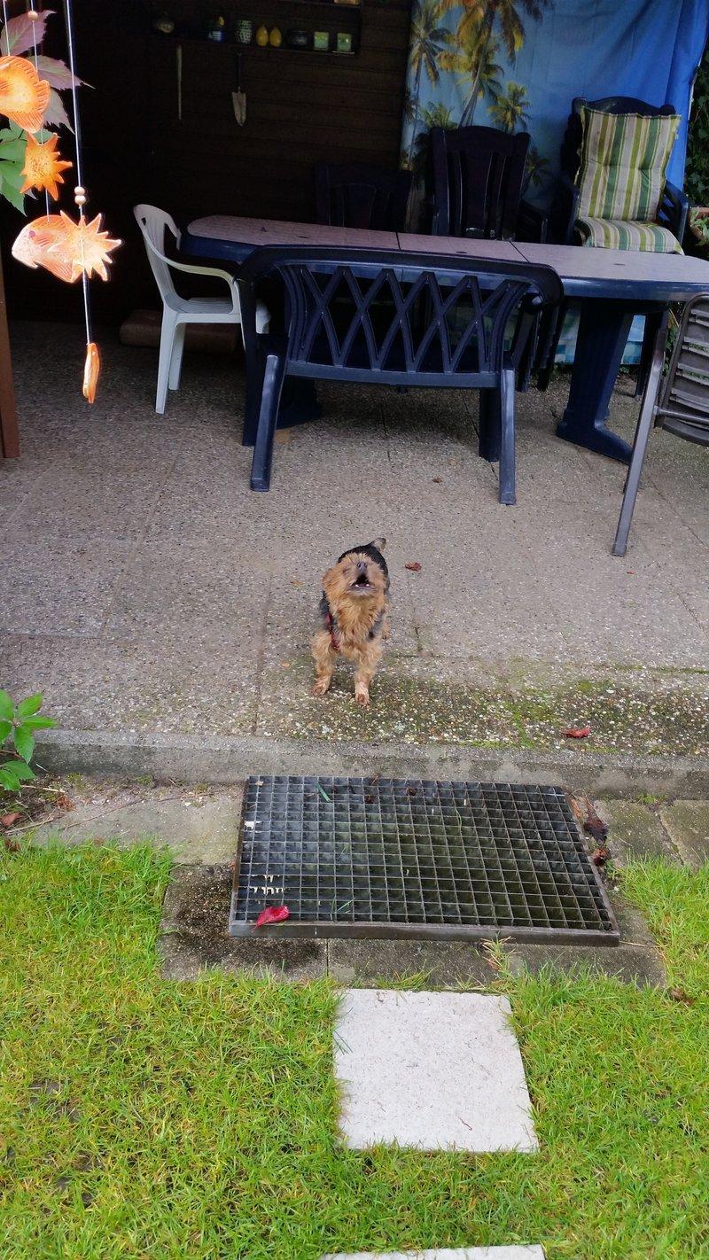 Milli ist zu Hause angekommen - Seite 5 19564401op