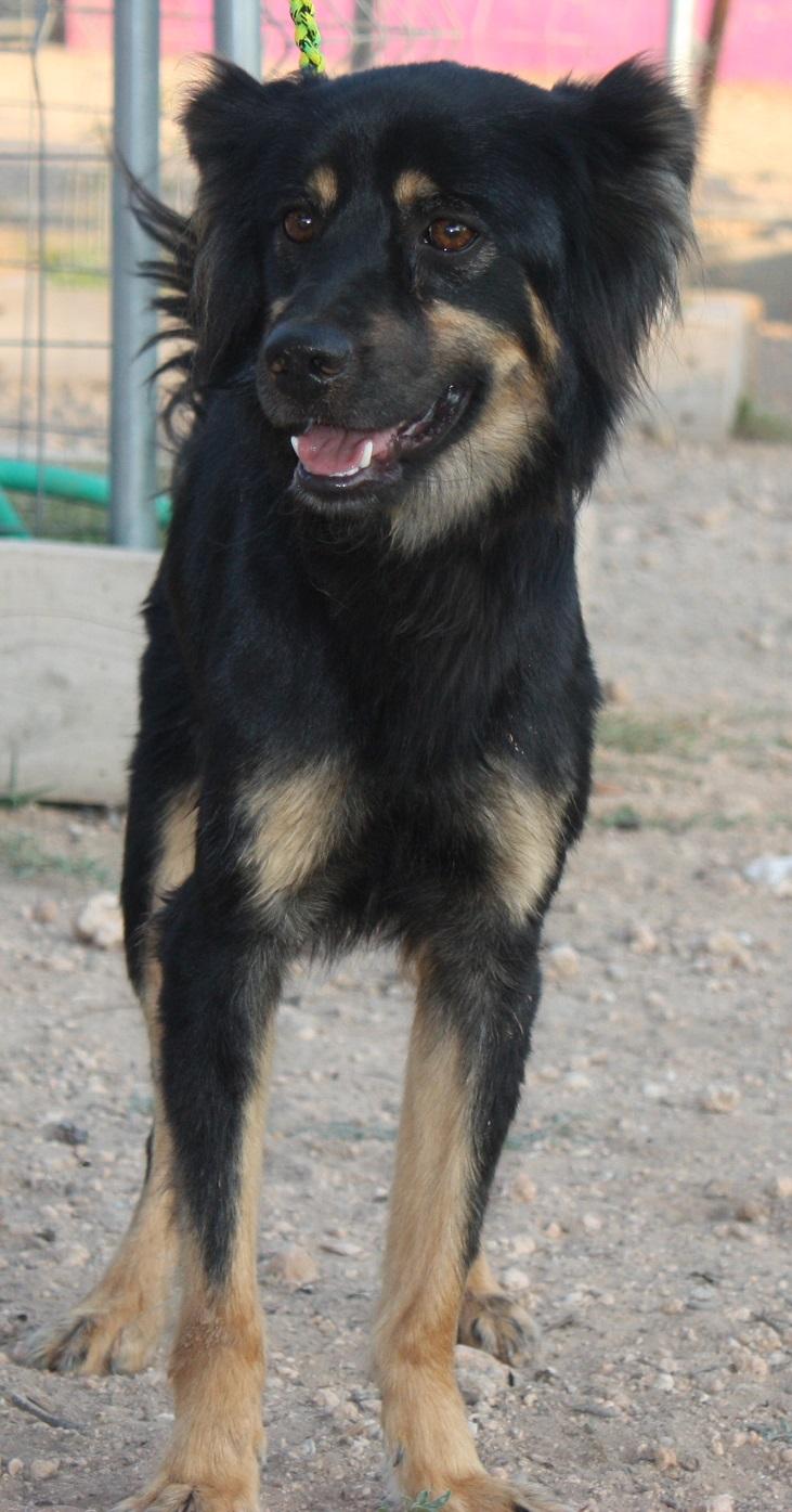 Bildertagebuch - Neko, so ein hübscher Hundejunge... - in Spanien ZUHAUSE GEFUNDEN! 19590675zq