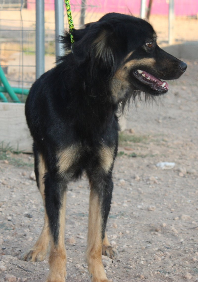 Bildertagebuch - Neko, so ein hübscher Hundejunge... - in Spanien ZUHAUSE GEFUNDEN! 19590678qa