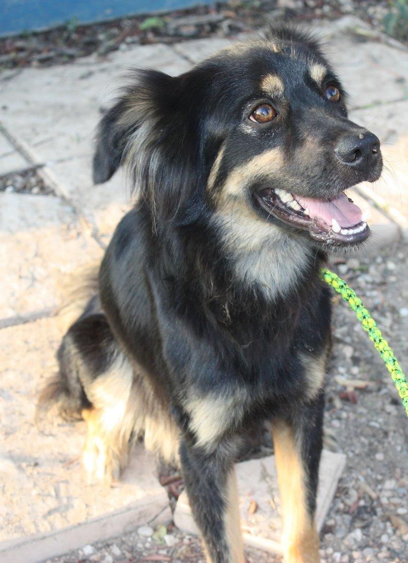 Bildertagebuch - Neko, so ein hübscher Hundejunge... - in Spanien ZUHAUSE GEFUNDEN! 19590681wx