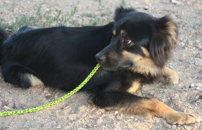 Bildertagebuch - Neko, so ein hübscher Hundejunge... - in Spanien ZUHAUSE GEFUNDEN! 19590682wd