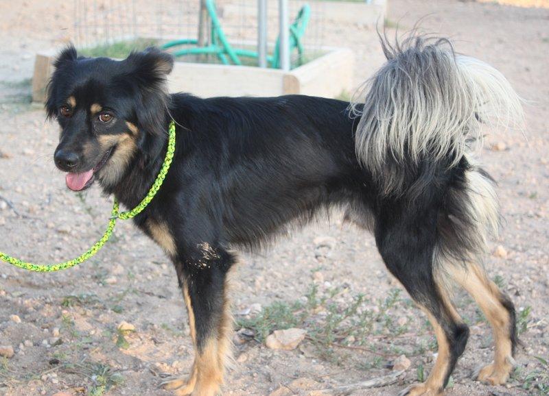 Bildertagebuch - Neko, so ein hübscher Hundejunge... - in Spanien ZUHAUSE GEFUNDEN! 19590683qo