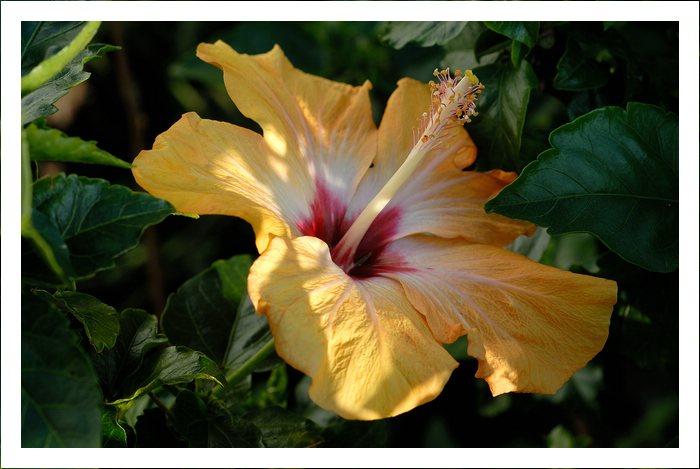 Blüten heute  19636646xw