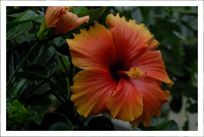 Blüten heute  19636651fv