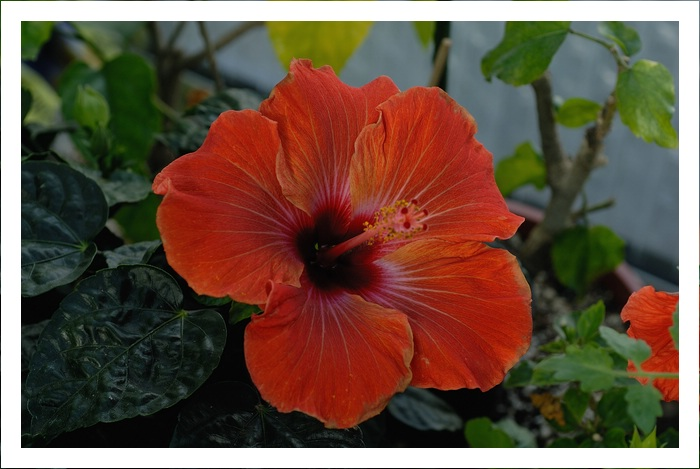 Blüten heute  19687944ri