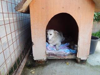 Angel lebte glücklich in Österreich RIP hübsche Maus 19895524xm