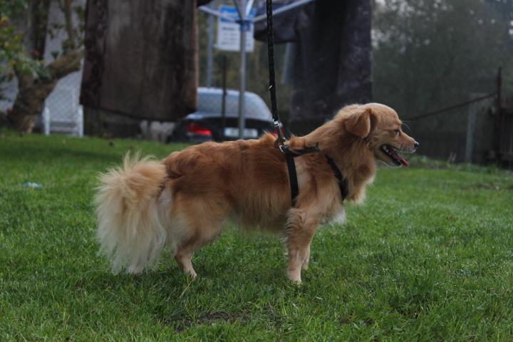 Goldie, ein wunderbarer Gefährte 19974943og