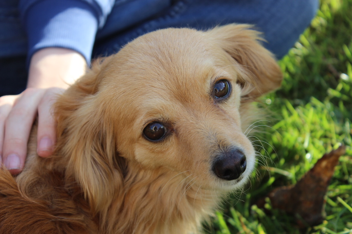 Goldie, ein wunderbarer Gefährte 19993403wu