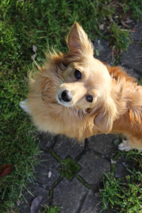 Goldie, ein wunderbarer Gefährte 19993466db