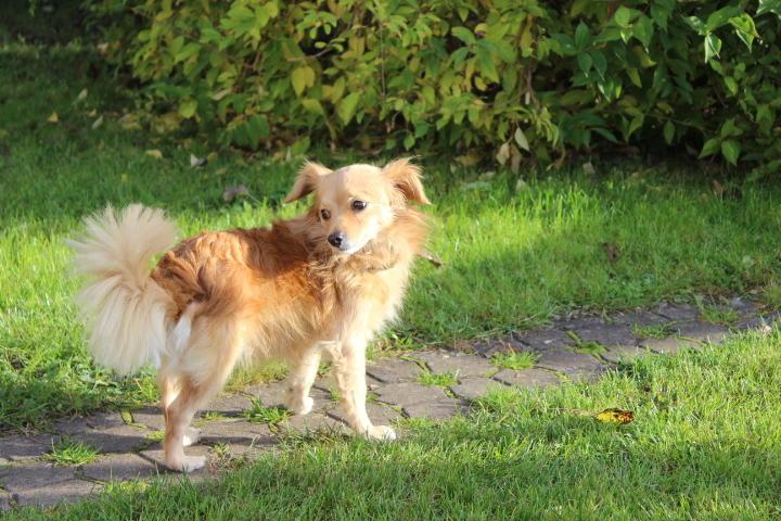 Goldie, ein wunderbarer Gefährte 19993531qz